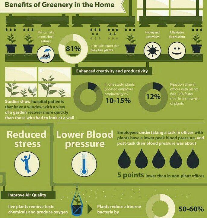 benefits of indoor plants infographic