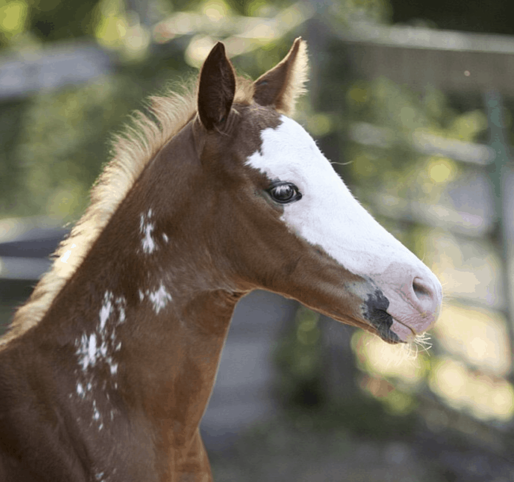 Baby horse in Honey Hollow - country chic mobile home