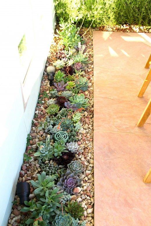 Succulents on sidewalk