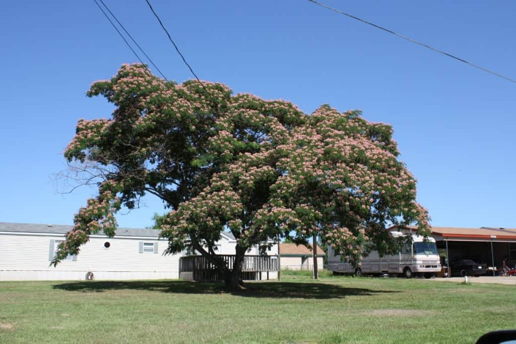 Trailer Park Near Bullard, TX Natureboy 77