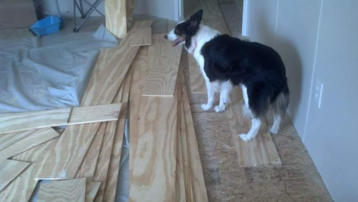 Amazing 2007 Fleetwood manufactured home makeover (layla the dog laying on plywood floor)