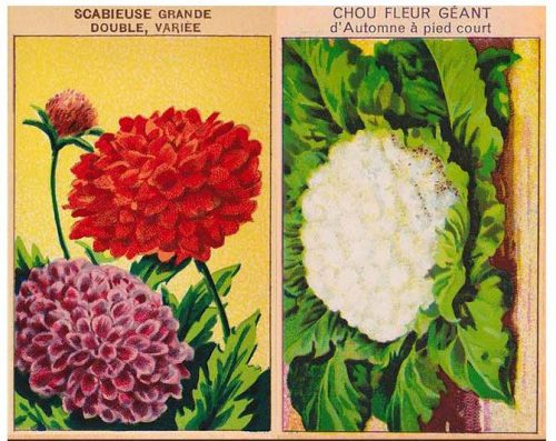 Free Seed Packet Covers - great wall art on a budget