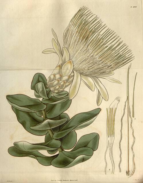 Free Vintage botanical illustrations - wall art on a budget