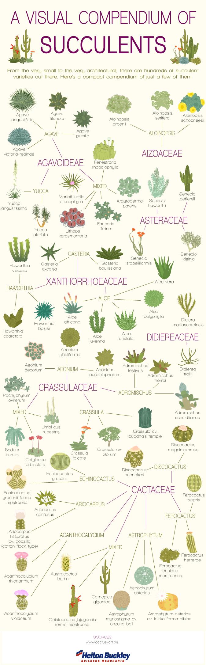 Visual-Comendium-of-Succulents-V2