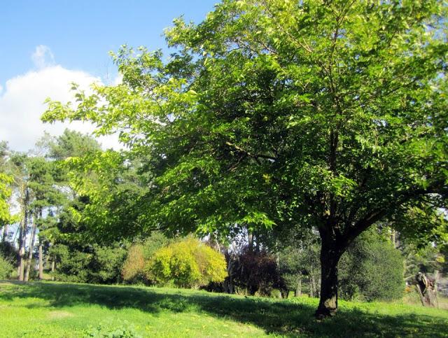 Divine double wide-lawn