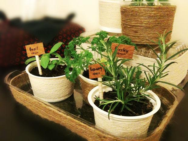 indoor gardening tips - mini herb garden