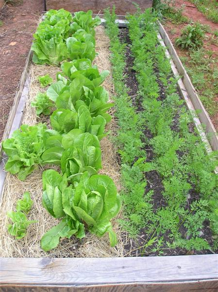 raised bed gardening - manufactured homesteading