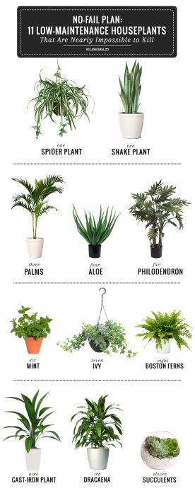 mobile home decor ideas-hard to kill plants
