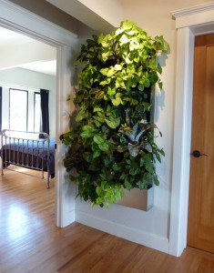 plants on a wall using pockets