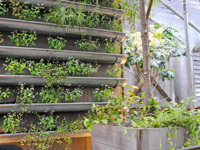 Rain-gutter-garden