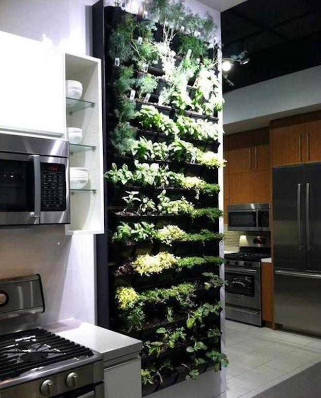 vertical garden in kitchen