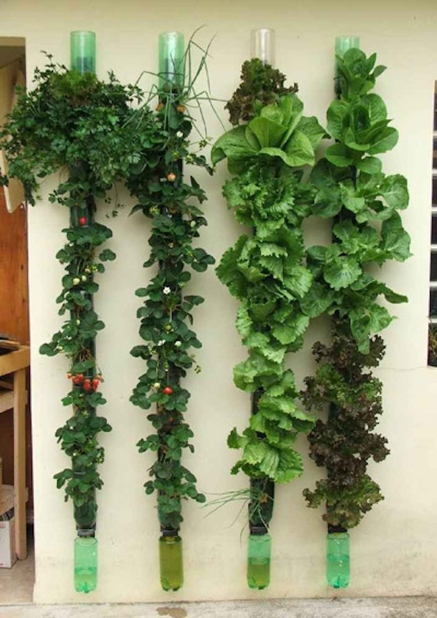 vertical veggie garden